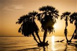 Sunrise On The Beach, Through The Palms Art Print