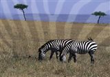 Zebra on the Serengeti, Kenya Art Print