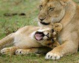 Kenya, Masai Mara, Keekorok Lodge. African lions Art Print
