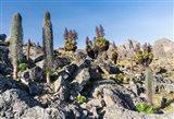 Landscape, Mount Kenya National Park, Kenya Art Print