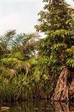 Africa, Liberia, Monrovia. Plantlife along the Du River. Art Print