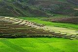 Spectacular green rice field in rainy season, Ambalavao, Madagascar Art Print