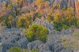 Limestone Formations, Tsingy de Bemaraha Strict Nature Reserve, Madagascar Art Print