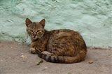 Morocco, Tetouan, Medina of TEtouan, Alley cat Art Print