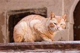 Stray Cat in Fes Medina, Morocco Art Print