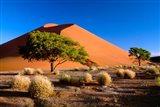 Trees with Sossosvlei Dunes, Namib-Naukluff Park, Namibia Art Print
