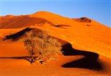 Elim Dune Overcomes, Sesriem, Namib Naukluft Park, Namibia Art Print