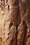 Bark on trunk of Quiver Tree, near Fish River Canyon, Namibia Art Print