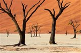 Dead trees with sand dunes, Namibia Art Print