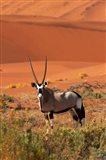 Gemsbok and sand dunes, Namib-Naukluft National Park, Namibia Art Print