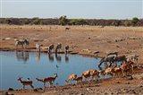 Africa, Namibia, Etosha. Black Faced Impala in Etosha NP. Art Print