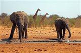 Elephants and giraffes, Etosha, Namibia Art Print