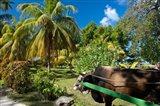 Seychelles, La Digue, ox-cart transport Art Print