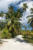 Seychelles, La Digue, Palm lined country path Art Print