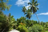 Seychelles, La Digue. Remote island path Art Print