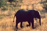 Close-up of Elephant in Kruger National Park, South Africa Art Print