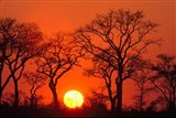 South Africa, Kruger NP, Trees silhouetted at sunset Art Print