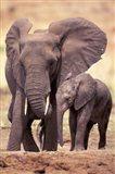 African Elephants, Tarangire National Park, Tanzania Art Print