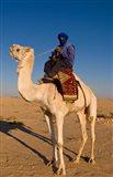 Bedouin man on camel, Douz, Sahara Tunisia, Africa Art Print