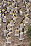 King penguins, Salisbury Plain Art Print