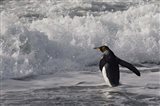 King Penguin in the surf, Antarctica Art Print