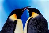 Emperor Penguin Pair, Antarctica Art Print