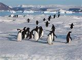 Adelie Penguins, Devil Island, Antartica Art Print