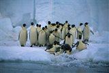 Emperor Penguins, Cape Roget, Ross Sea, Antarctica Art Print
