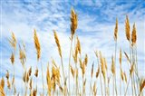Wheat Blowing in the Wind Art Print