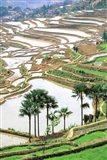 Asia, China, Yunnan Province, Jiayin. Flooded Terraces Art Print