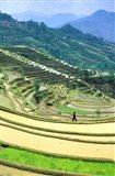 China, Yunnan, Yuanyang Co, Rice Terraces, Mount Ailo Art Print