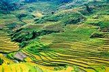 China, Yuanjiang, Cloudy Sea Terrace, Agriculture Art Print
