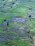 Flooded Tiger's Mouth Terraces, Yuanyang, Yunnan, China Art Print