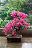 Spring Blossoms cover Bonsai, The Chi Lin Buddhist Nunnery, Hong Kong, China Art Print