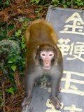 China, Zhangjiajie National Forest, Rhesus Macaque Art Print