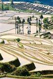 Flooded Ai Cun Rice Terraces, Yuanyang County, Yunnan Province, China Art Print
