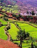 Rice Terraces, Jiayin Village, Honghe, Yunnan, China Art Print