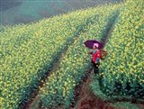 Chinese Woman Walking in Field of Rapeseed near Ping' an Village, Li River, China Art Print