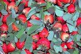 China, Chongqing, Strawberries in fruit market Art Print