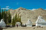 White Stupa Forest, Shey, Ladakh, India Art Print