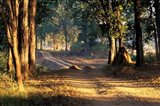 Rural Road, Kanha National Park, India Art Print