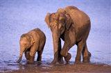 Pair of Asian Elephants, Nagarhole National Park, India Art Print