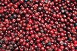Asia, India, Darjeeling. Red berries, Fresh Fruits Art Print