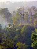 Sulawesi Tangkoko Rainforest, Sulawesi Art Print