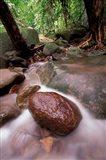 Rainforest Stream, Bako National Park, Borneo, Malaysia Art Print
