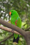 Singapore Colorful Green Parrot Art Print