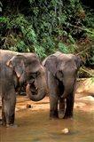 Asian Elephants in Khao Yi National Park, Thailand Art Print