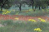 Rural Landscape and Wildflowers, Cappadocia, Turkey Art Print