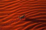 Thorny Devil, Central Desert, Australia Art Print