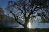 Willow Tree, Lake Wanaka, Wanaka, South Island, New Zealand Art Print